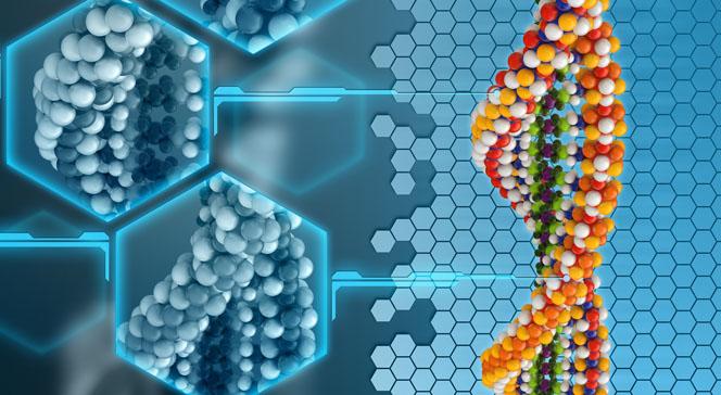 Разновидности аминокислот