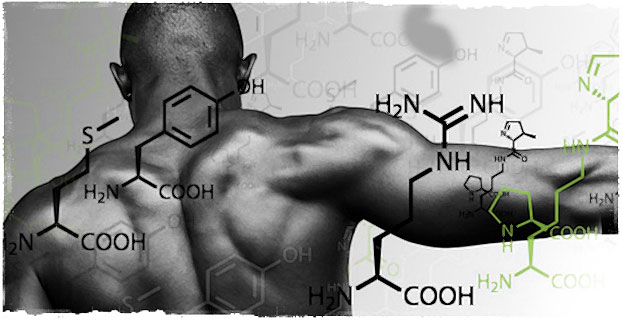 Аминокислоты в теле бодибилдера