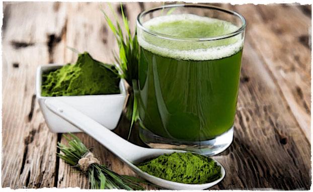 Зеленая спирулина полезная водоросль