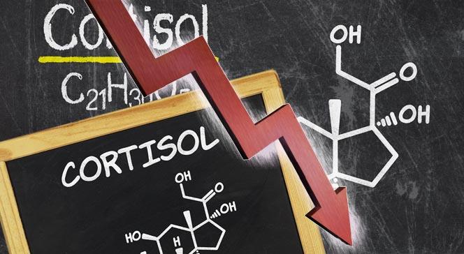 Как снизить кортизол быстро