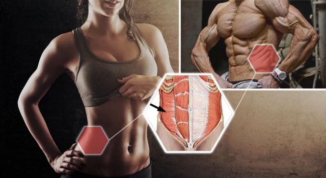 Упражнения на поперечную мышцу живота лучшие