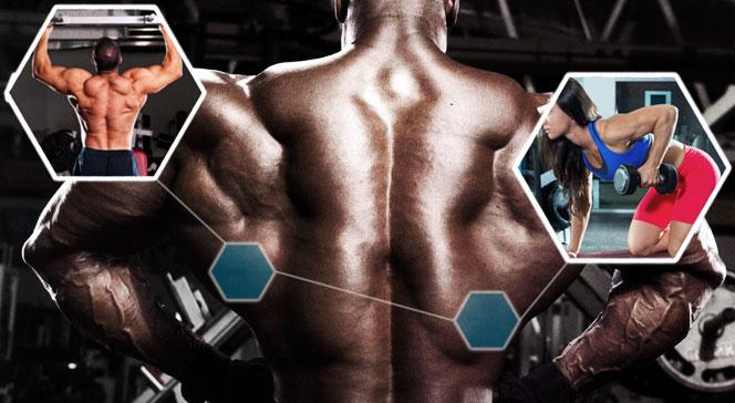 Широчайшие мышцы спины тренировка дома