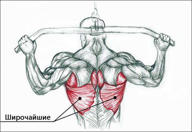 Широчайшие спины