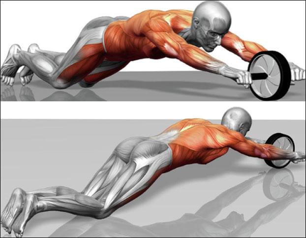 Какие мышцы прорабатывает колесо для пресса