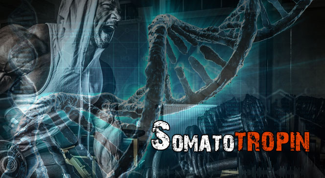 Соматотропин функции гормон роста