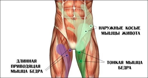 Задействованы мышцы паха