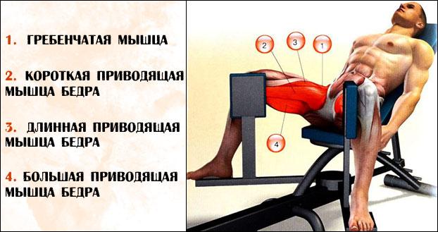 Сведение ног в тренажере какие мышцы работают