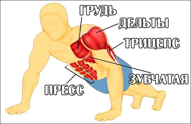 Схема мышцы при отжиманиях