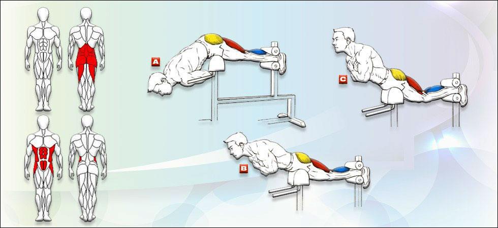 Мышцы которые прорабатываются при гиперэкстензии
