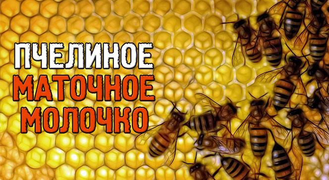 Маточное молочко пчелиное польза для организма