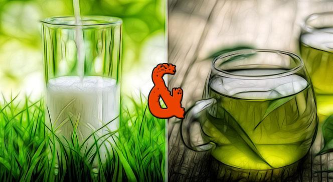 Зелёный чай с молоком польза и вред