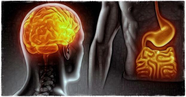 Грелин и интеллект