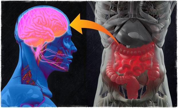 Желудок и мозг голод