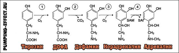 Дофамин и адреналин норадреналин