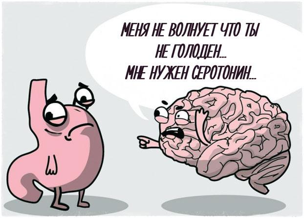 Мозг и желудок