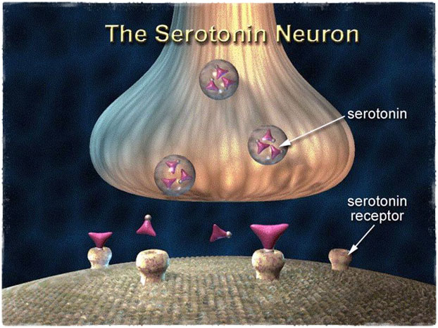 Рецепторы серотонина