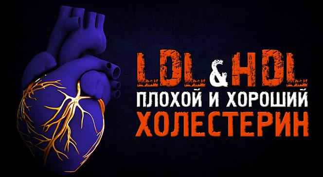 Хороший и плохой холестерин HDL LDL