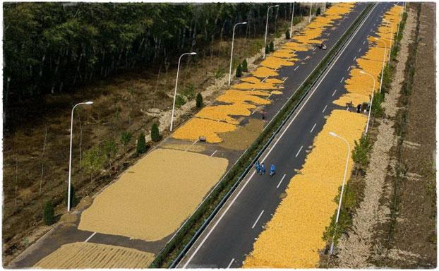 В Китае сушат кукурузу